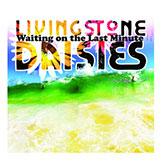 livingstone-daisies