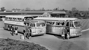 greyhound-buses